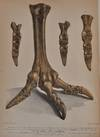 View Image 3 of 4 for A PICTORIAL ATLAS OF FOSSIL REMAINS, Consisting of Coloured Illustrations Selected from Parkinson's ... Inventory #019810