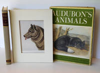 Audubon's Animals; The Quadrupeds of North America ( With Complete Set of Plates ) by  John James; Compiled and Edited by  Alice Ford Audubon - First Edition - 1951 - from Dale Steffey Books (SKU: 006191)