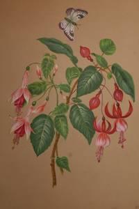 Album of Eleven Fine and Original Watercolor Botanical Studies