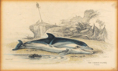 "4 x 6 3/8"" hand-colored steel engraving. . 4 x 6 3/8"" hand-colored steel engraving, on paper. Ov..."