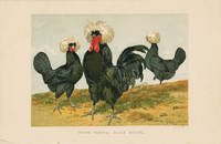 WHITE CRESTED BLACK POLISH. by  Harrison (illus) TEGETMEIER -- COLOR WOOD-ENGRAVINGS) Weir - Ca. 1870. - from oldimprints.com and Biblio.com