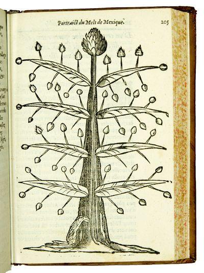 Histoire admirable des plantes et...