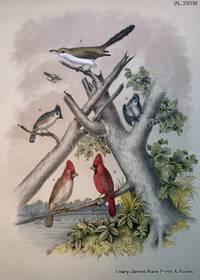 Plate XXVIII The Yellow-billed Cuckoo, Crested Titmouse, The Cardinal Grosbeak