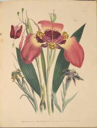 image of The Ladies' Flower-Garden of Ornamental Bulbous Plants