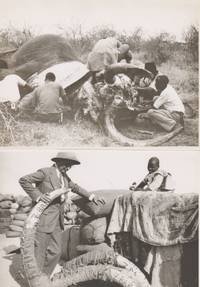340 Photgraphic Prints of an American's Excursion Culminating in an African Safari.