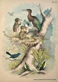 Plate VII The Green Heron (Ardea-Butorides virescens); The Cat Bir (Mimus carolinensis); The Maryland Yellow Throat (Geothlypis trichas).