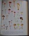 Flore Iconographique des Champignons du Congo. Fascicules 9-17