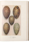 View Image 1 of 4 for Eggs of the Birds of Europe including All the Species Inhabiting the Western Palaearctic Area Inventory #39452