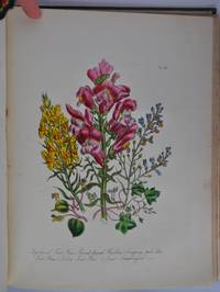 British Wild Flowers by Mrs Loudon - Hardcover - 2nd Edition - 1846 - from E C Books and Biblio.com