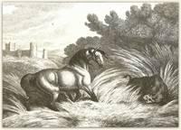 The Horse & Wild Boar